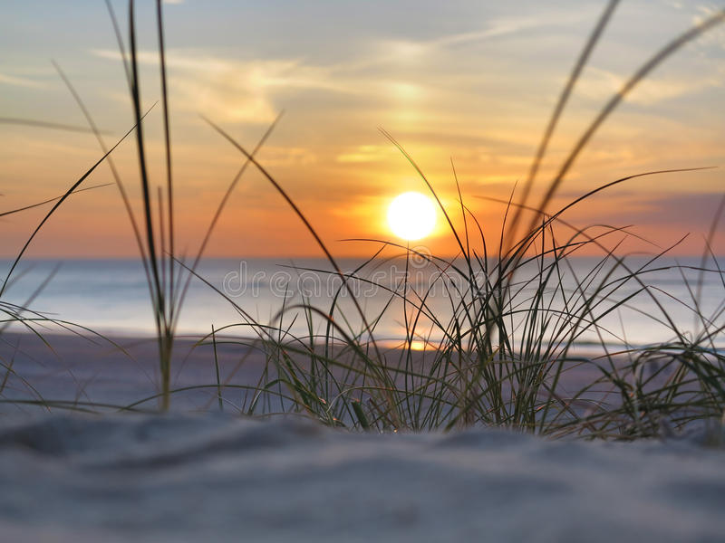 Sunset and beachgrass. Seaside sunset seen through the beach grass royalty free stock photos