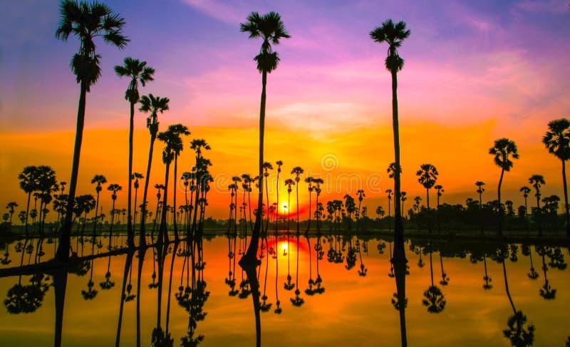 Sunset beautiful nature with palm tree royalty free stock photo