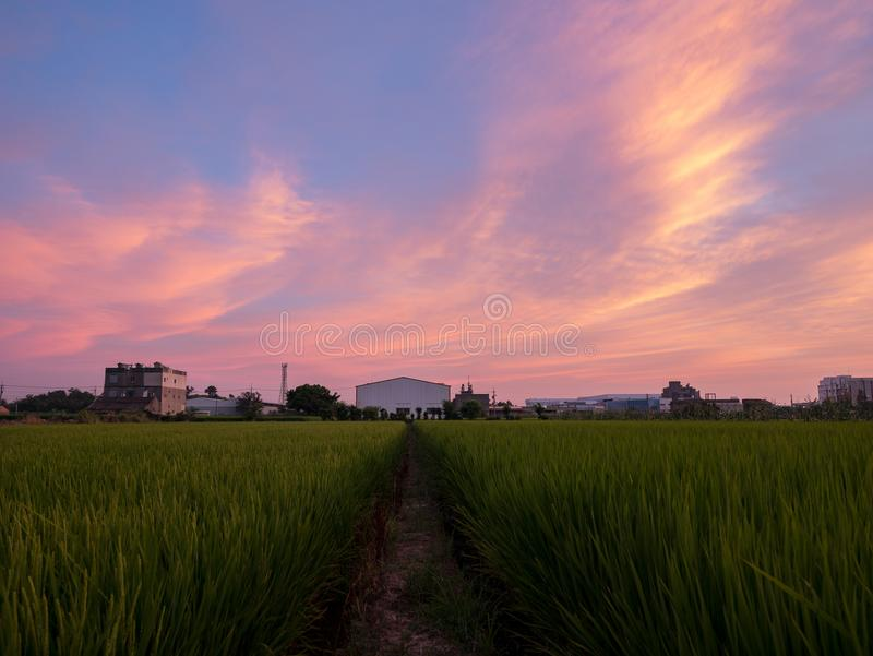 Sunset beautiful sky and clouds with a green rice field royalty free stock images