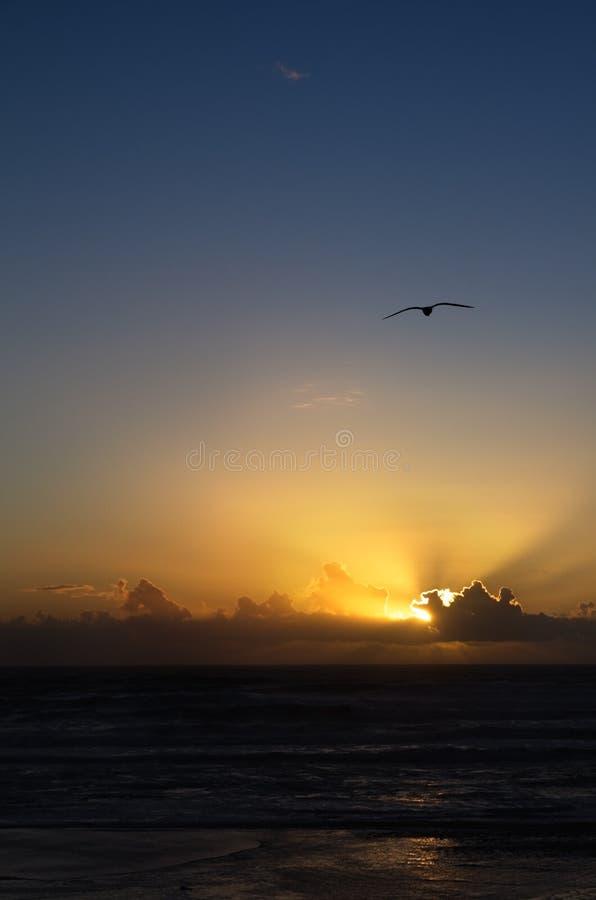 Golden sunset seagull stock image