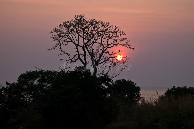 Download Sunset Behind A Lone Tree Royalty Free Stock Photos - Image: 19836838
