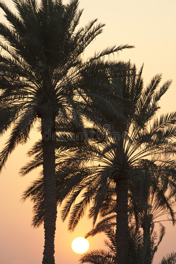 Sunset Behind Palm Trees Royalty Free Stock Photo