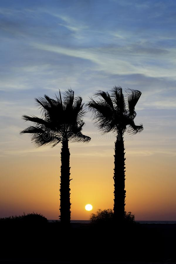Sunset behind palm trees stock images