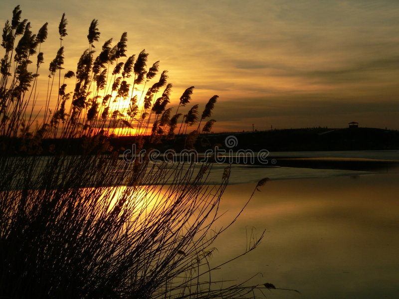 Sunset behind the reed royalty free stock photos