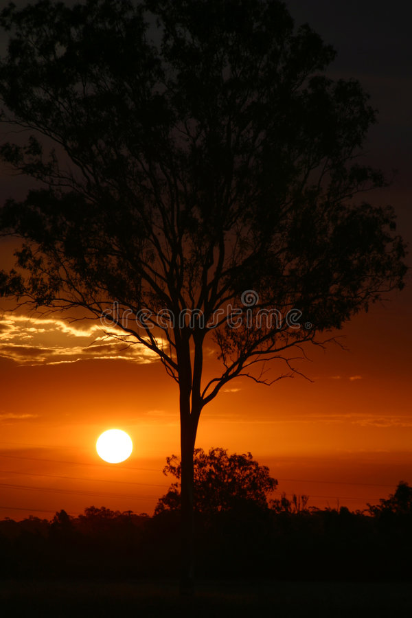 Sunset Behind Tree stock image