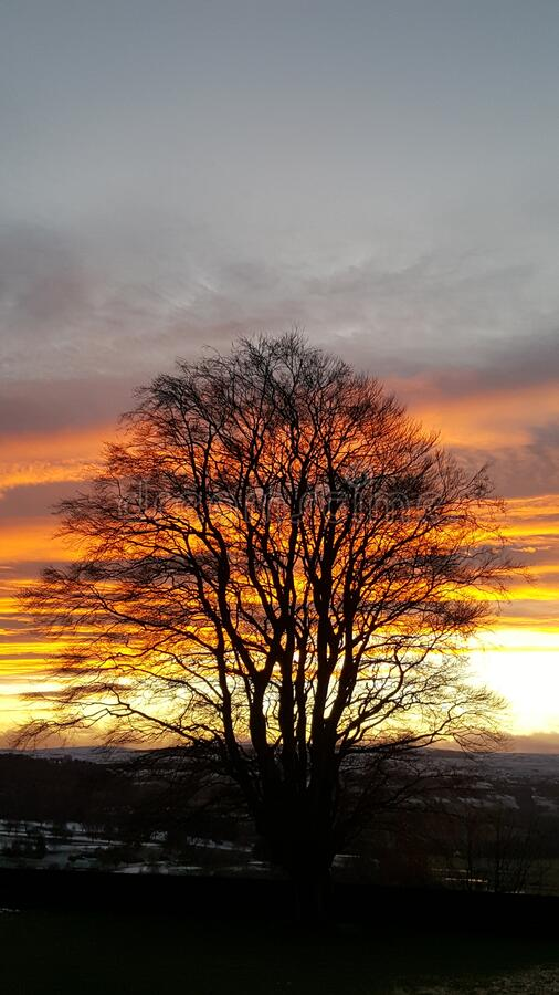 Sunset behind tree orange sky in Stirling Scotland royalty free stock photography