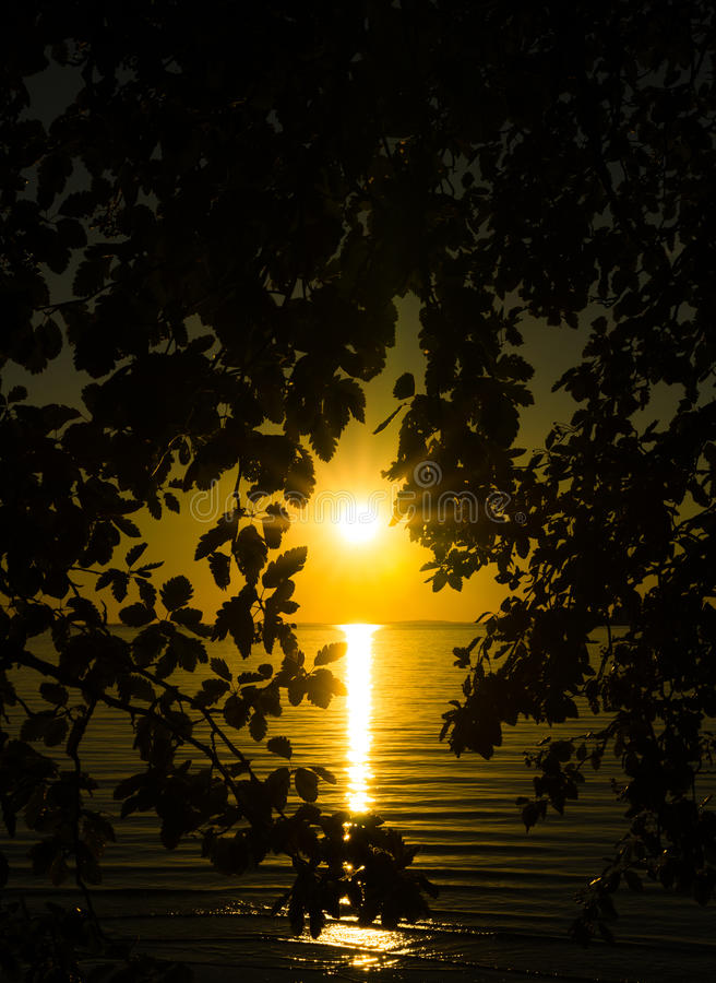 Sunset from behind a tree royalty free stock image