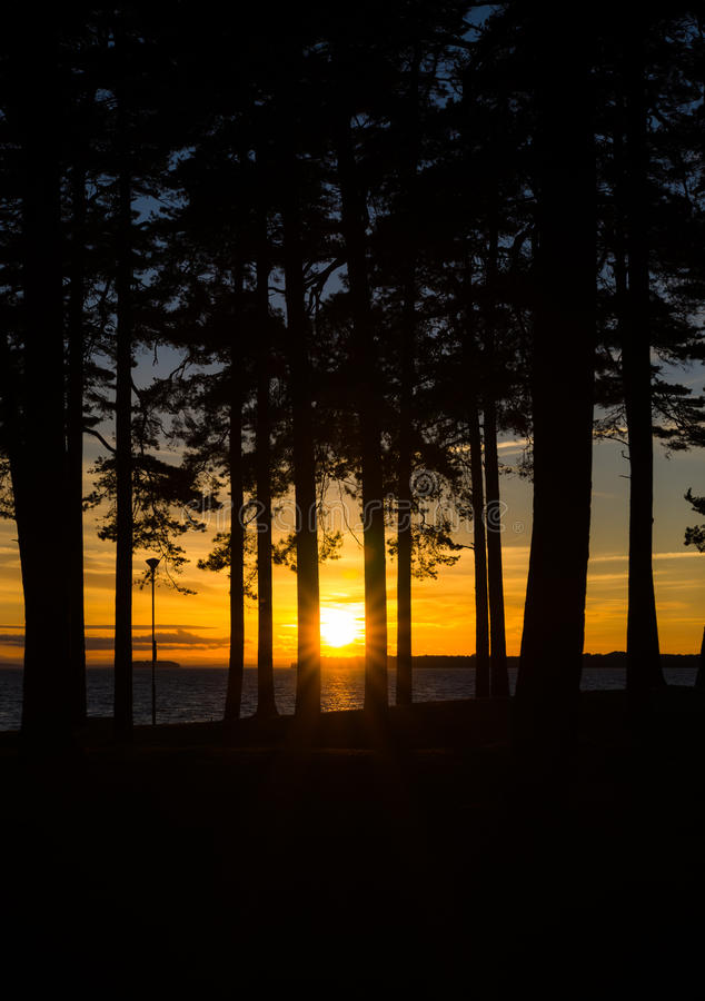 Sunset from behind the trees royalty free stock photos