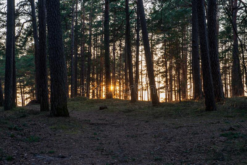 Sunset behind trees with lens blur effect. Dark tones background stock photography