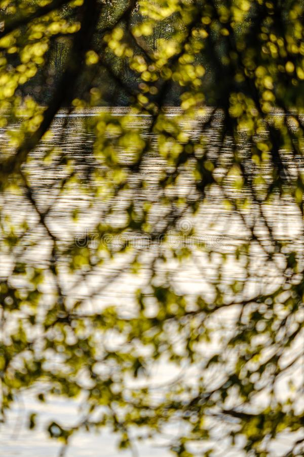 Sunset behind trees with lens blur effect. Dark tones background royalty free stock photos