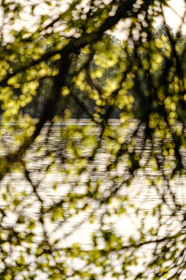 Sunset behind trees with lens blur effect. Dark tones background royalty free stock photography