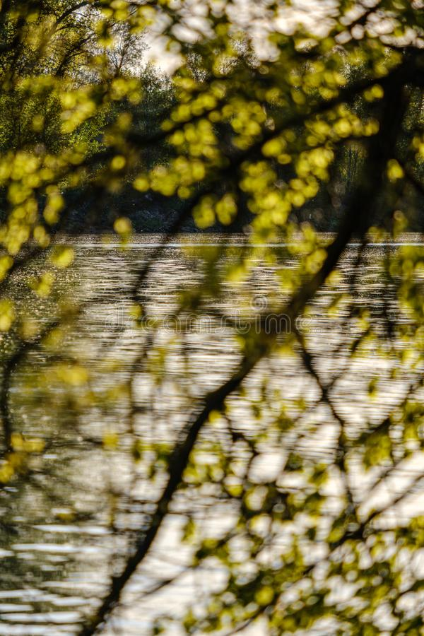 Sunset behind trees with lens blur effect. Dark tones background stock photos
