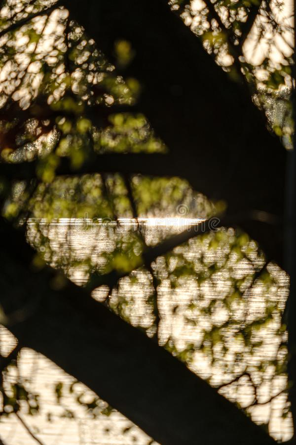 Sunset behind trees with lens blur effect. Dark tones background stock image