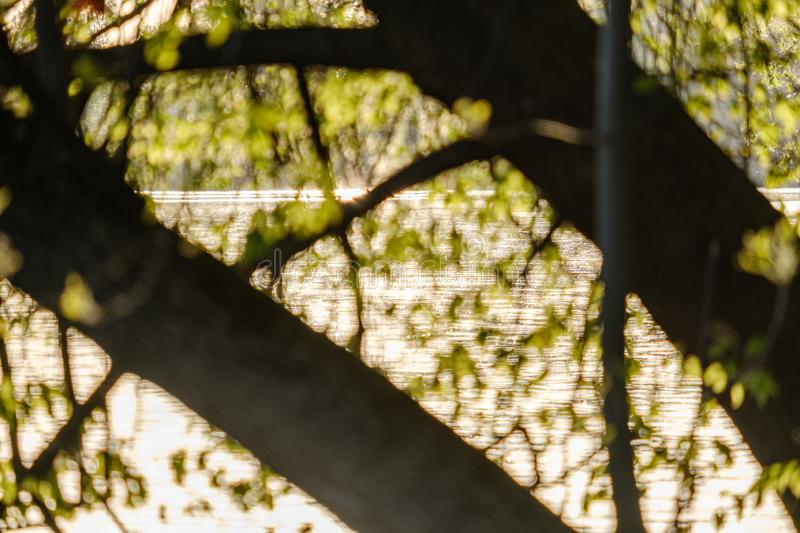 Sunset behind trees with lens blur effect. Dark tones background royalty free stock photo