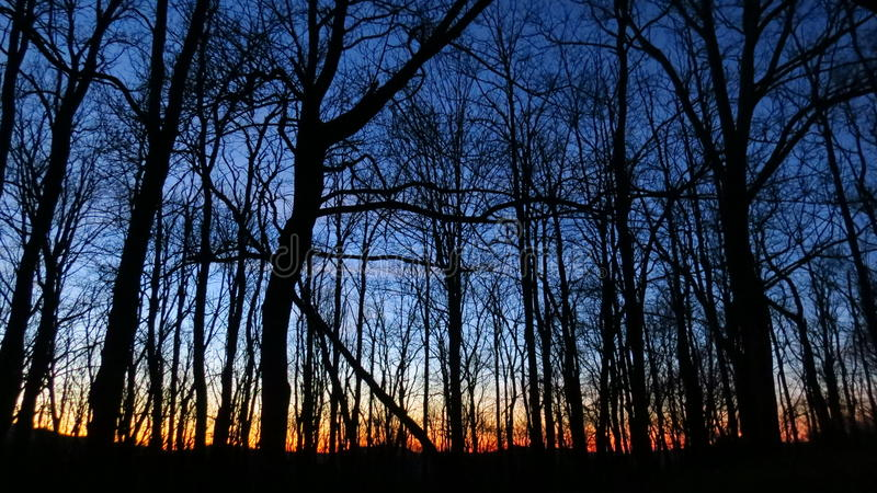 Sunset behind the trees royalty free stock photography