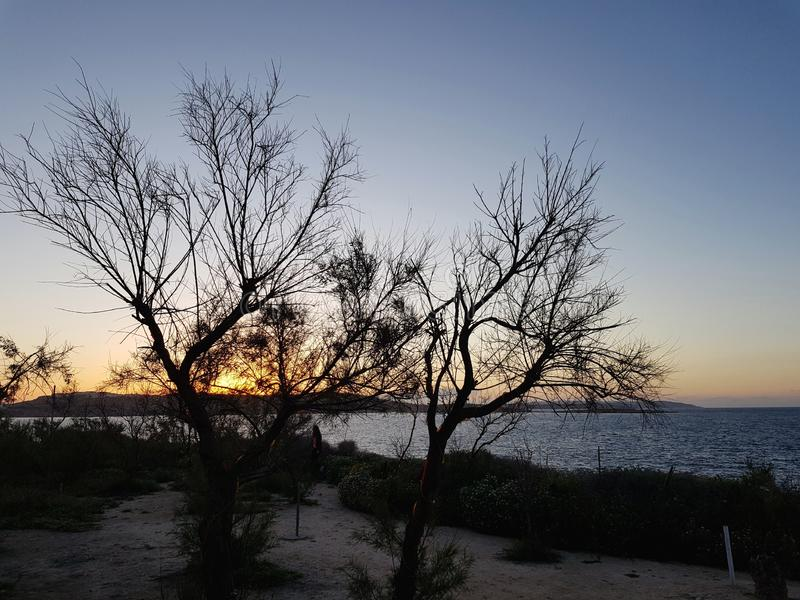 Sunset behind trees stock photography