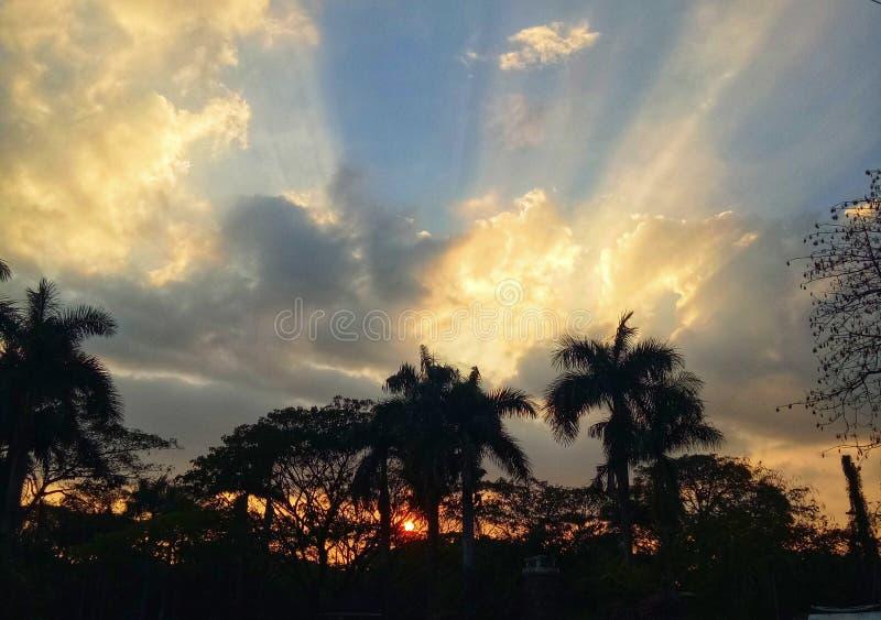Sunset behind trees royalty free stock image