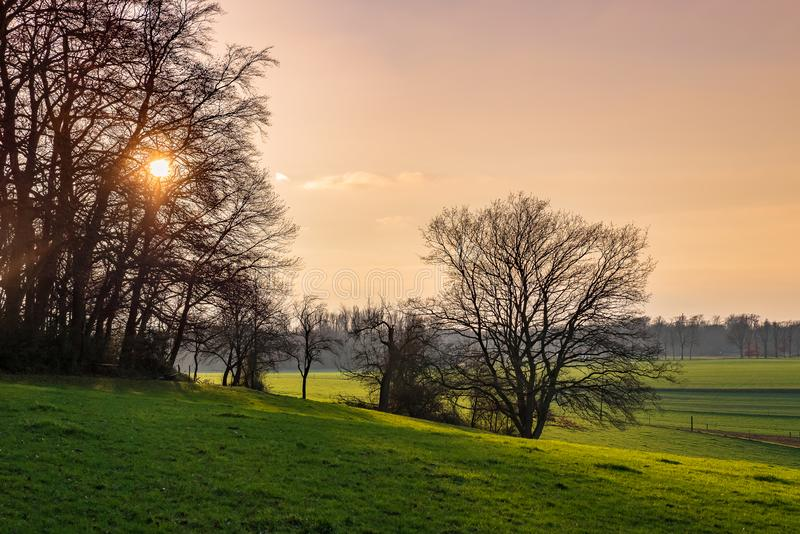 Sunset behind trees and view over fields and meadows royalty free stock images