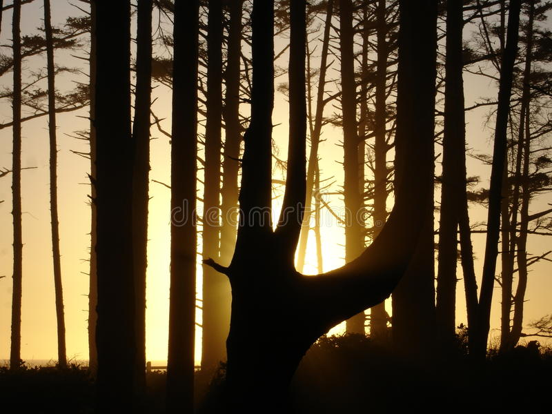 Download Sunset Behind Tress On The Beach Usa Stock Photo - Image: 12511210