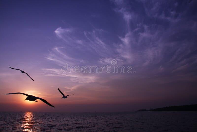 Sunset bird stock photography