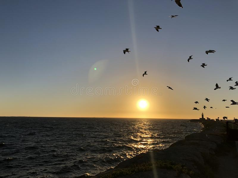 Sunset and birds. Birds flying into sunset stock photography
