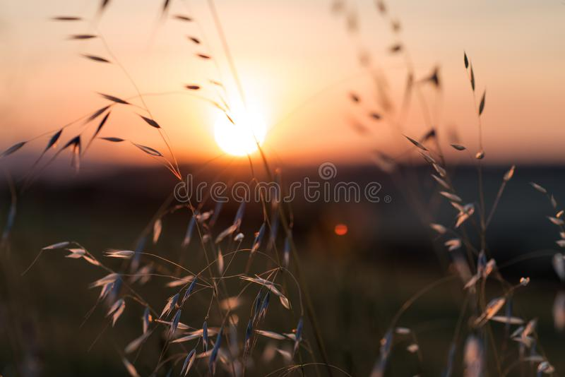 Sunset blur through blades of grass in the wind in Toscana - Italy. Sunset blur through blades of grass waving in the wind in Toscana, Italy royalty free stock images