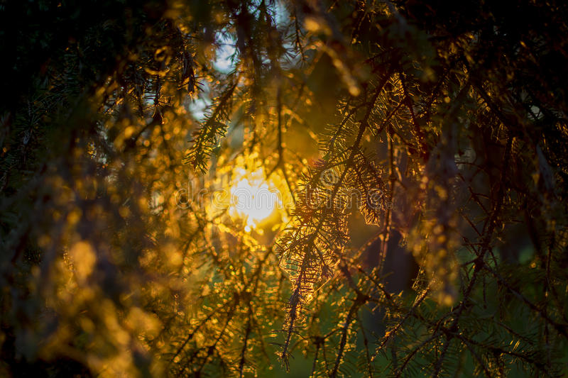Sunset in branch stock images