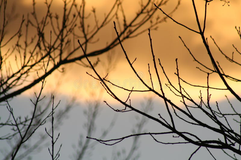 Sunset through the branches royalty free stock photo