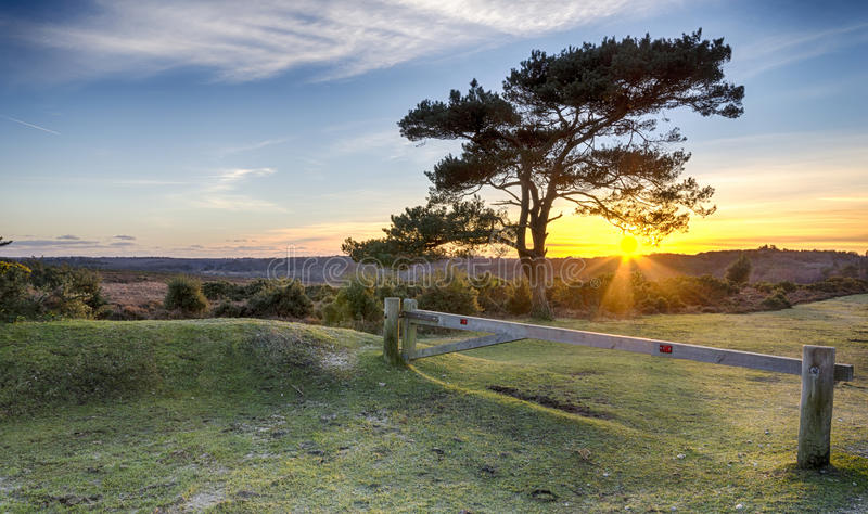 Sunset at Bratley View in the New Forest. A Starburst of sunlight Through a Scots Pine tree at Bratley View in the New Forest Nation Park in Hampshire stock images