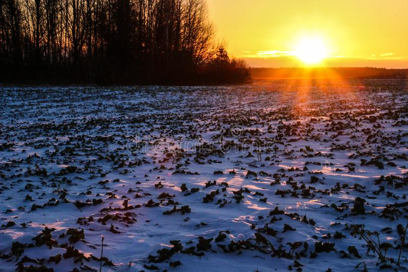 Sunset and bright winter sun over the forest. And snow field stock images