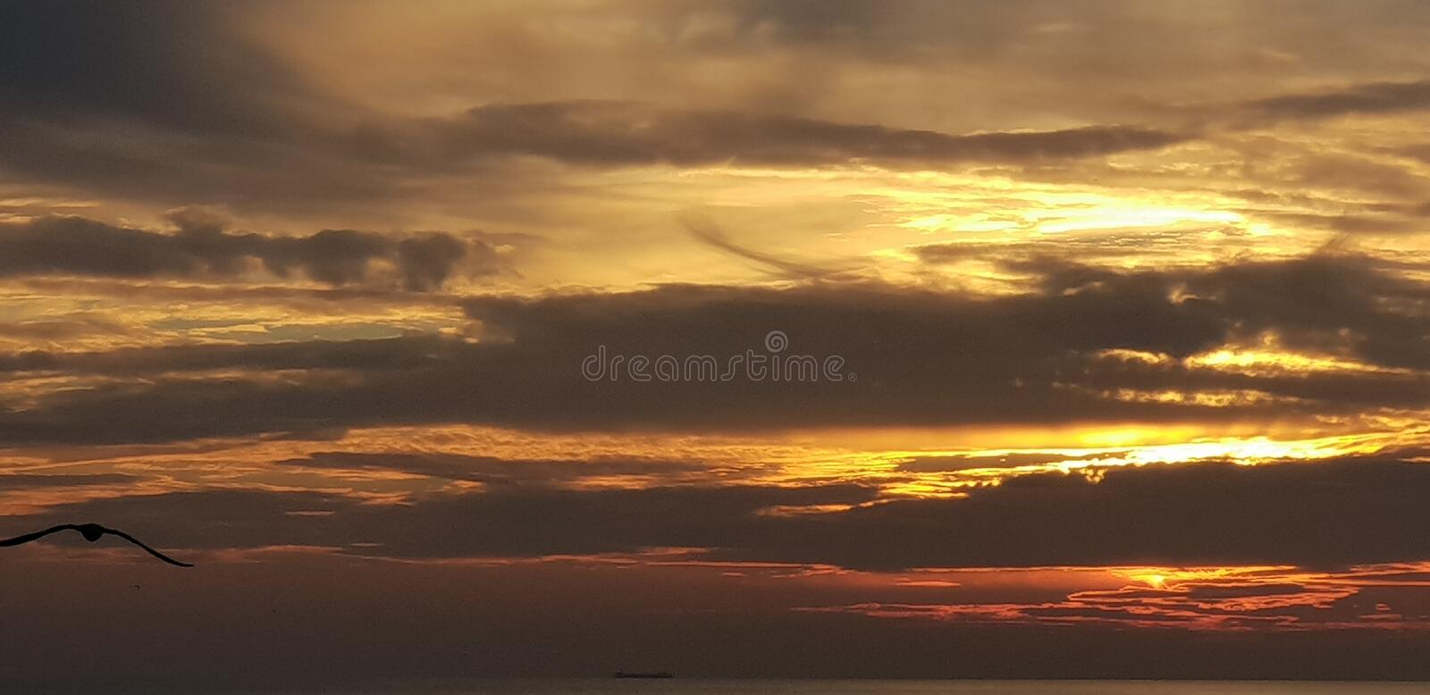 Sunset Brighton seagull bird nighttime is coming fast royalty free stock photos