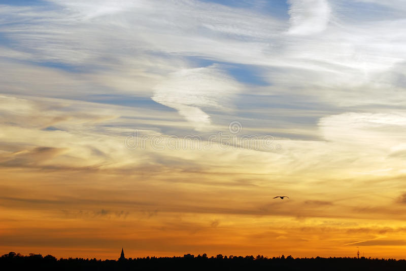 Sunset. Buildings, seagull, forest silhouette with sundown in sky stock image