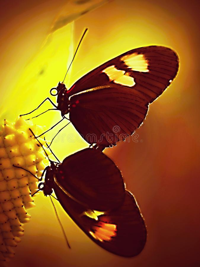 Sunset -The butterflys sits silently on the leaf - Butterfly on ZOO , close up. The most beautiful jewel in the garden is the butterfly. In addition, by stock image