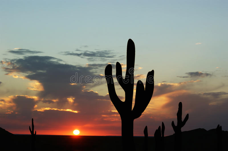 Download Sunset And Cactus Royalty Free Stock Photos - Image: 17245178