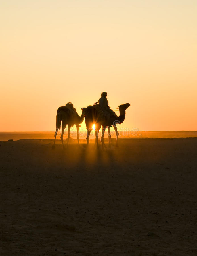 Sunset caravan in sahara stock photography