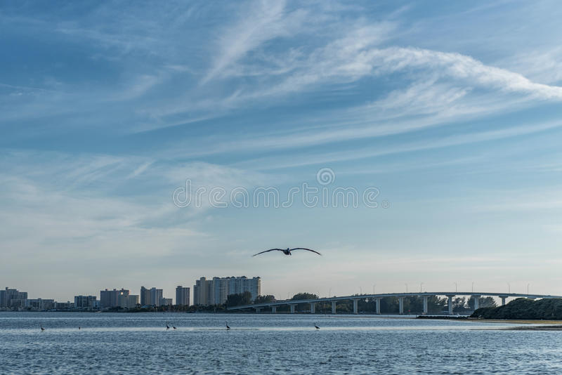 Sunset in Clearwater Beach, Florida. Flying Pelican.  royalty free stock images