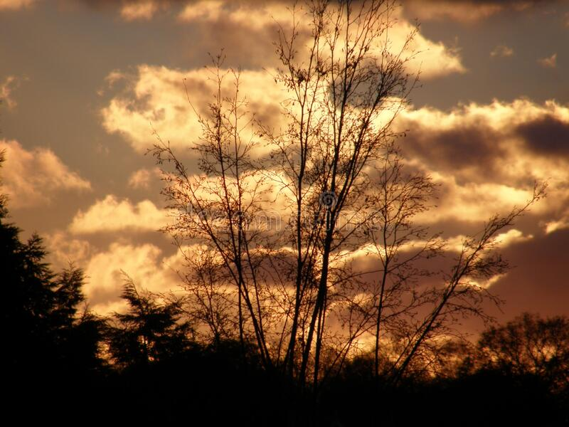 Sunset clouds as seen through a tree. The sunset through the clouds has made the cloud yellow stock photo