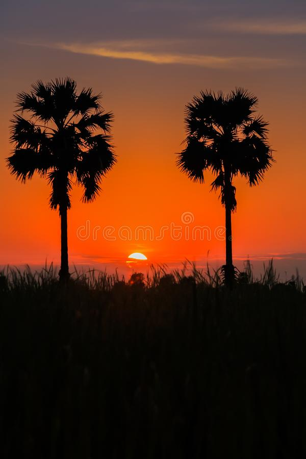 A sunset colorful silhouette of couple palm trees. A sunset colorful of sky with silhouette of couple palm trees stock photo