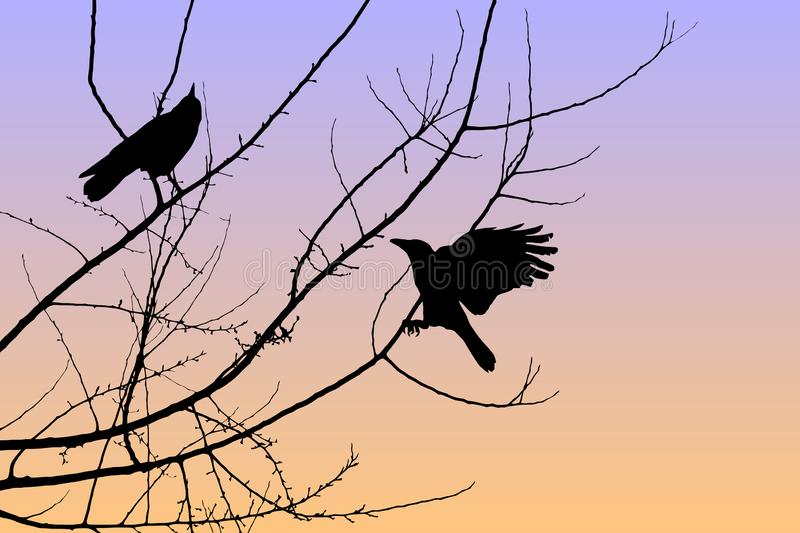 Sunset Crows stock images