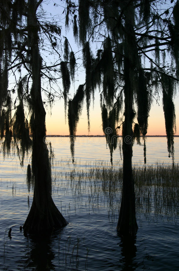 sunset cyprysowi drzewa obraz royalty free