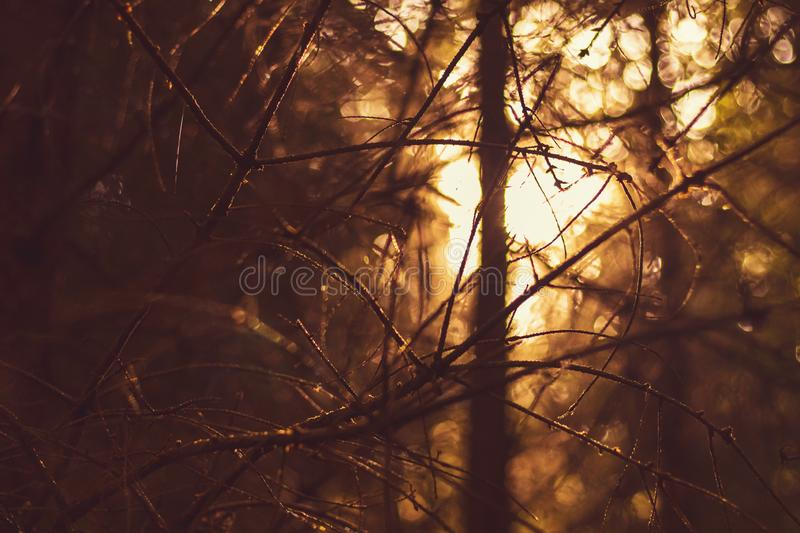 Sunset in the dark forest royalty free stock photo