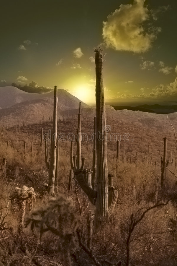 Sunset in the desert stock images
