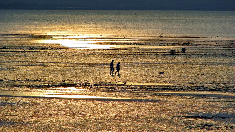 Sunset dog walkers at low tide. Photo of two silhouetted dog walkers and dog strolling along a beach at low tide with golden shimmering sands at sunset stock photography