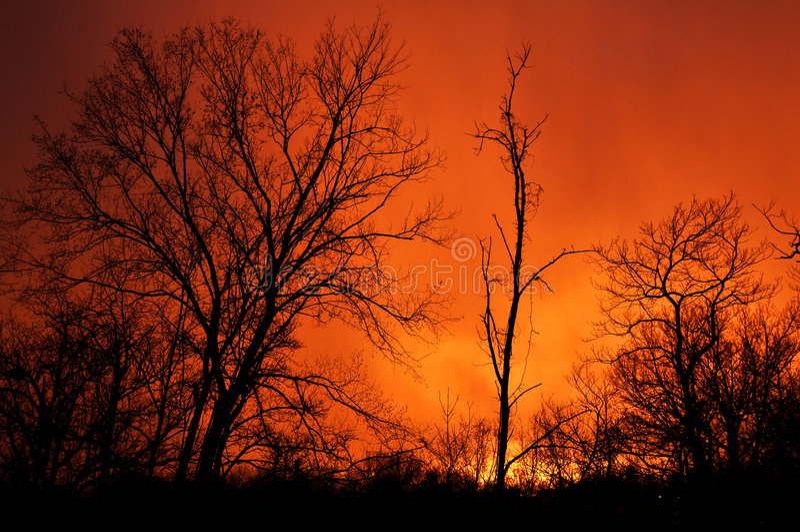 sunset drzewa zdjęcia royalty free