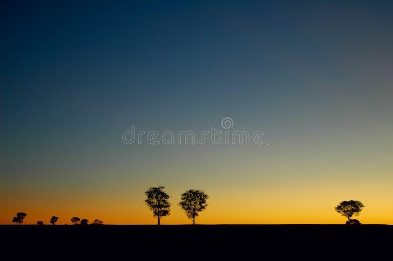 sunset drzewa zdjęcie stock