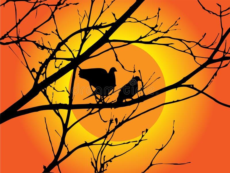 sunset drzewo ptaka ilustracja wektor