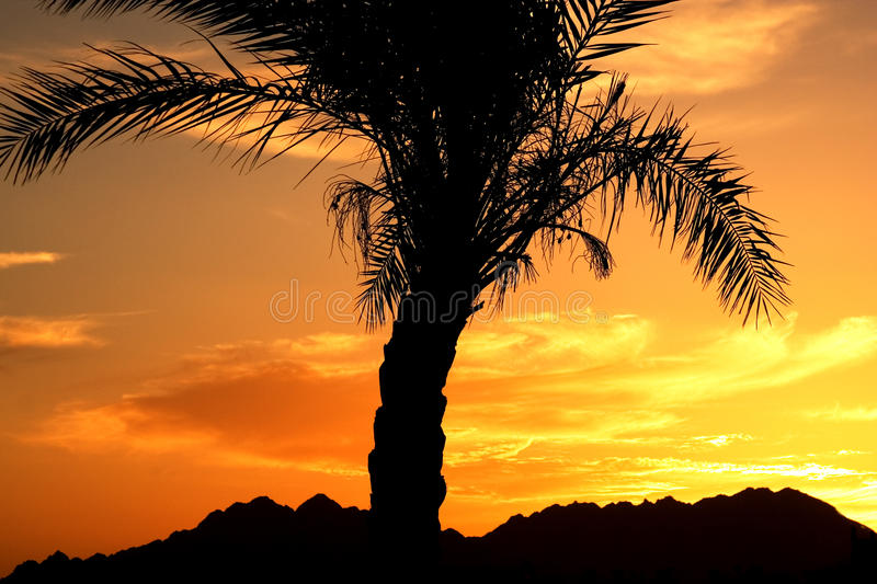 Sunset in Egypt stock images