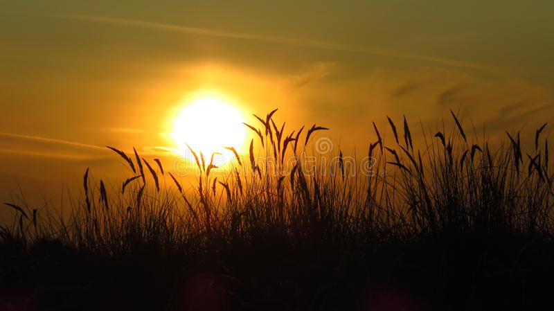 Sunset with European beachgrass. In the dunes stock images