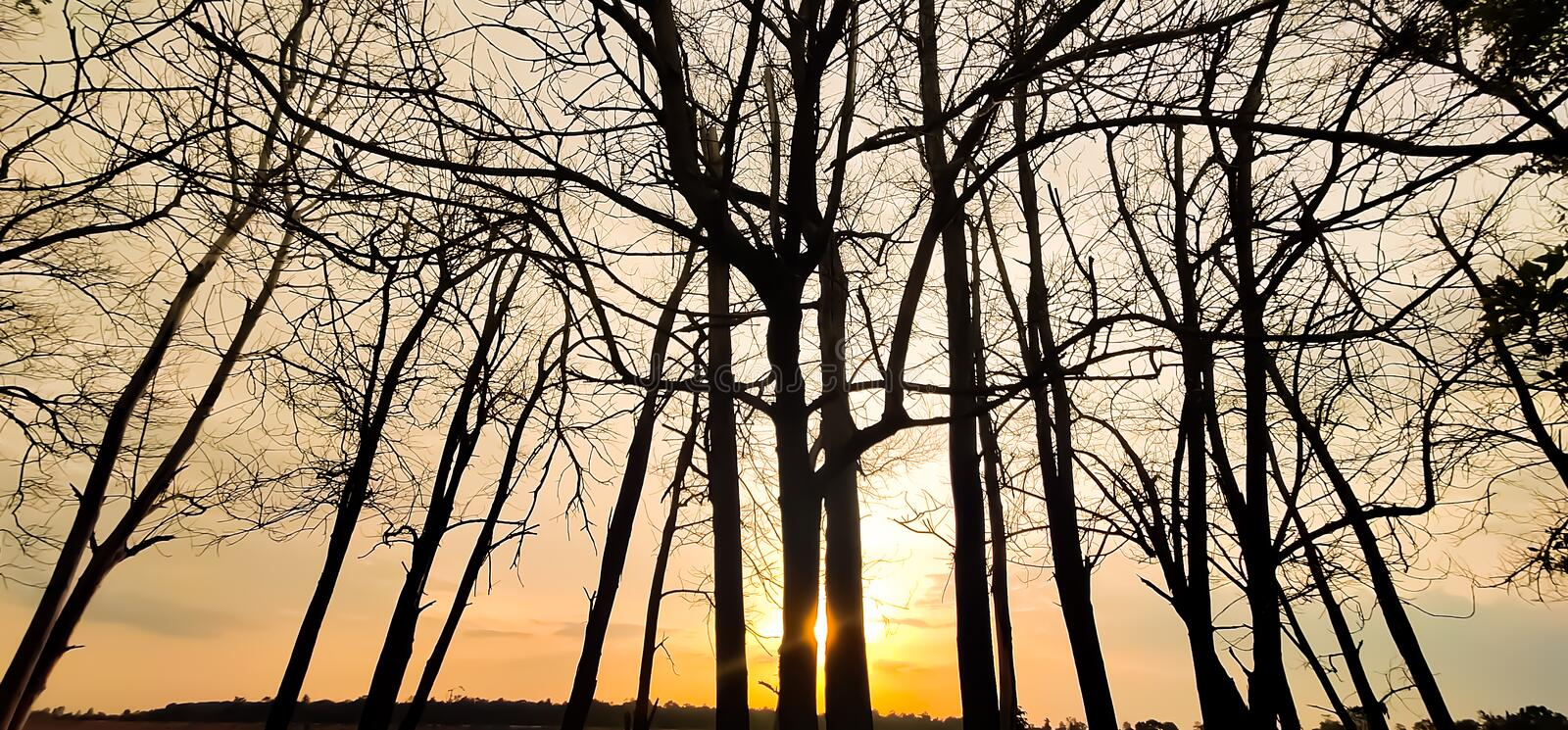 Sunset evening golden light glowing wilted tree Beauty from the shadows wilted trees. Sunset in the evening, golden light glowing on the wilted tree Beauty from royalty free stock photography