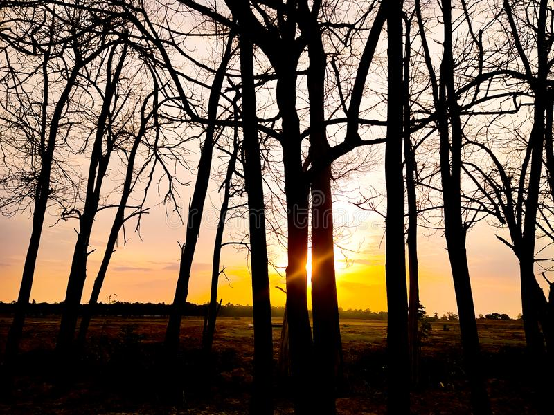 Sunset evening golden light glowing wilted tree Beauty from the shadows wilted trees stock images